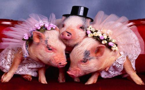 So cute Baby schwein, Tierkostüm, Süßeste haustiere