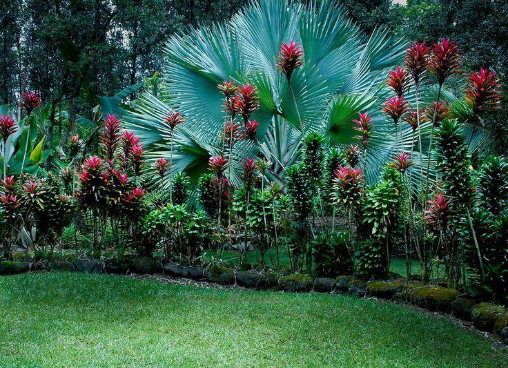 Related Image Tropischer Garten Tropische Garten Tropische Landschaftsgestaltung