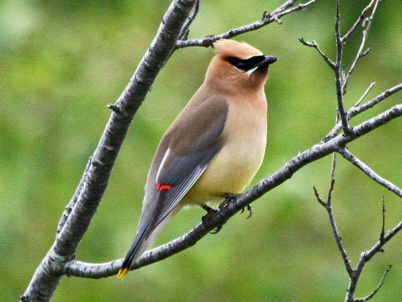 Unusual, Strange, and Weird Birds of North Carolina ...