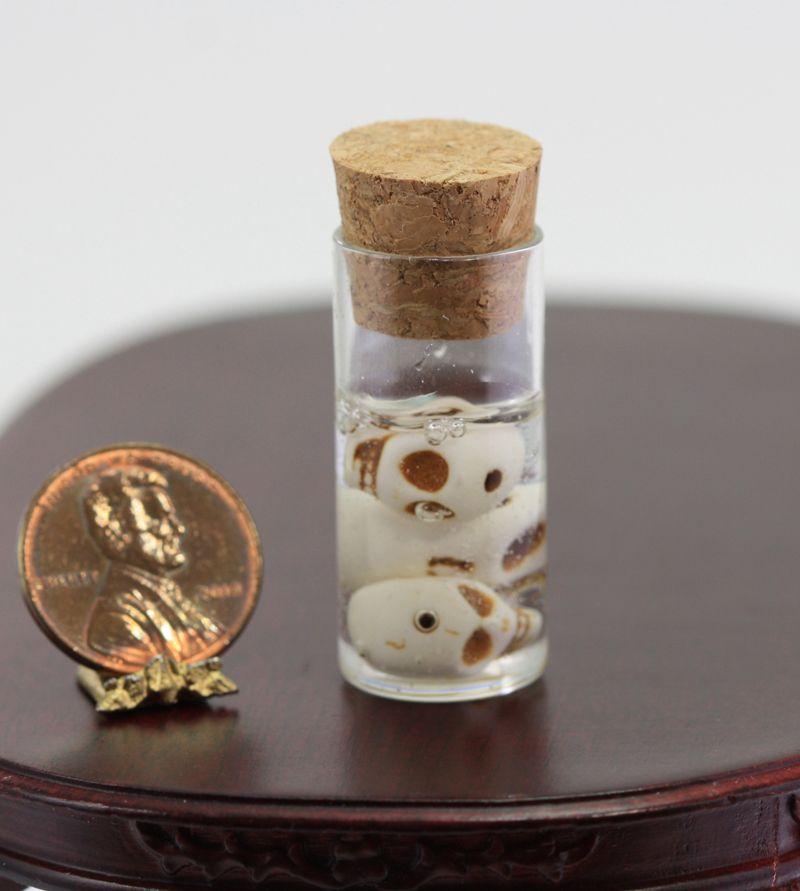 Tall Glass Jar Of Pygmy Skulls