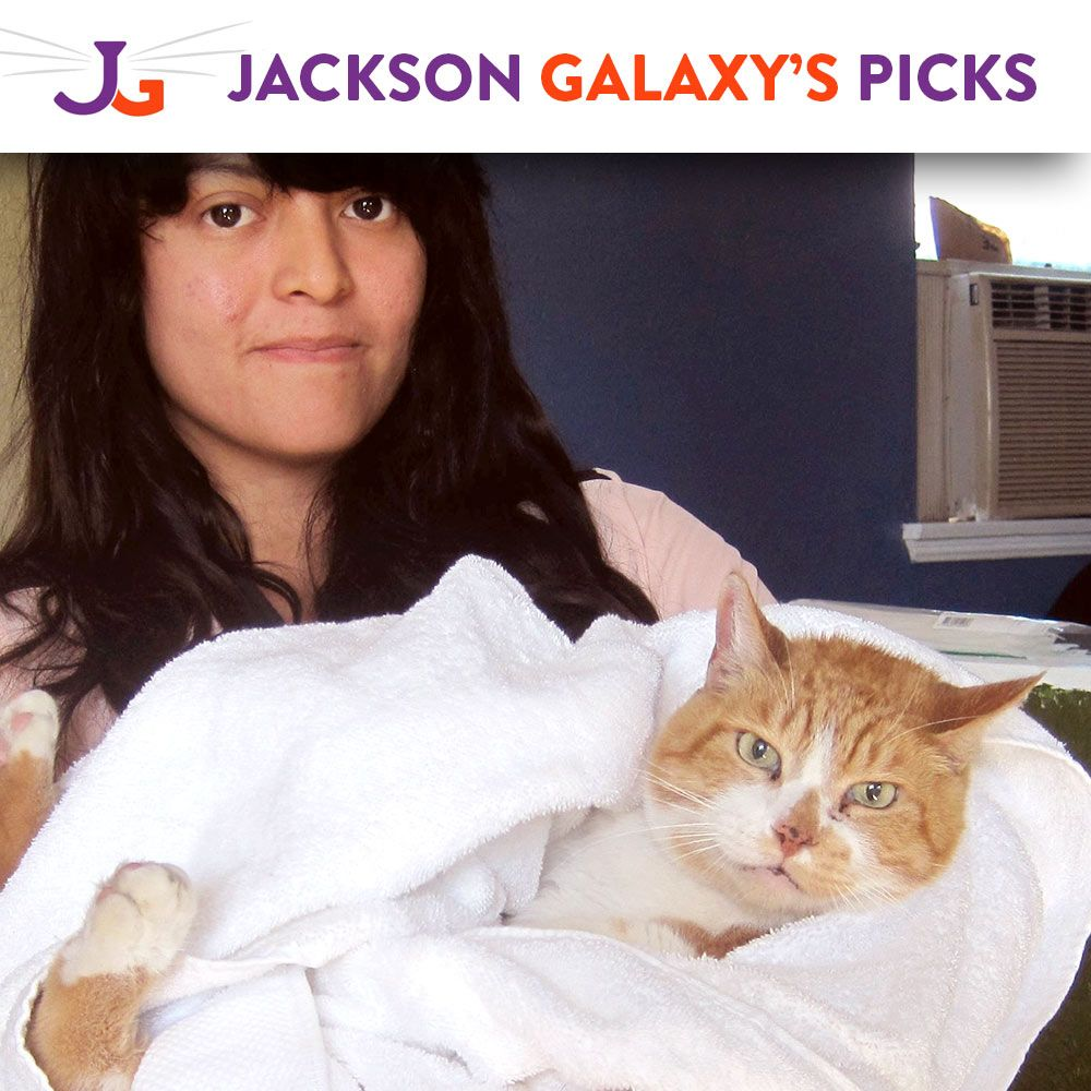 Help kittens and cats in an impoverished area at the