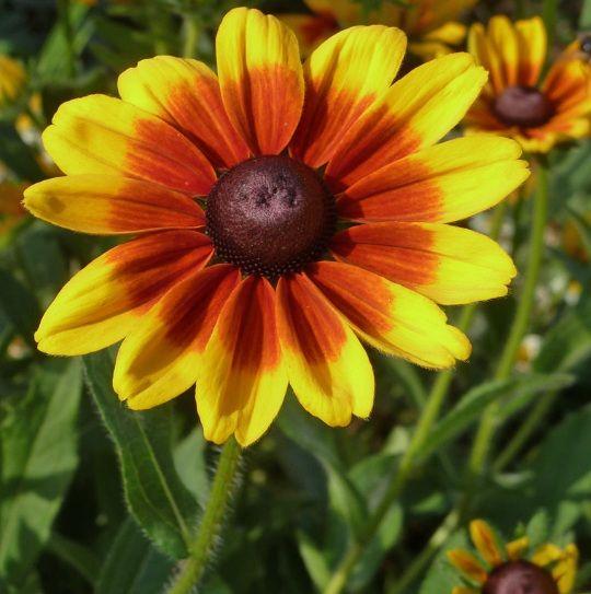Daftar Nama Bunga Gambar Bunga Cantik Indah Unik Dan Langka Lengkap Dengan Penjelasannya Kumpulan Macam Macam Bunga Hi Wallpaper Bunga Bunga Gambar Bunga