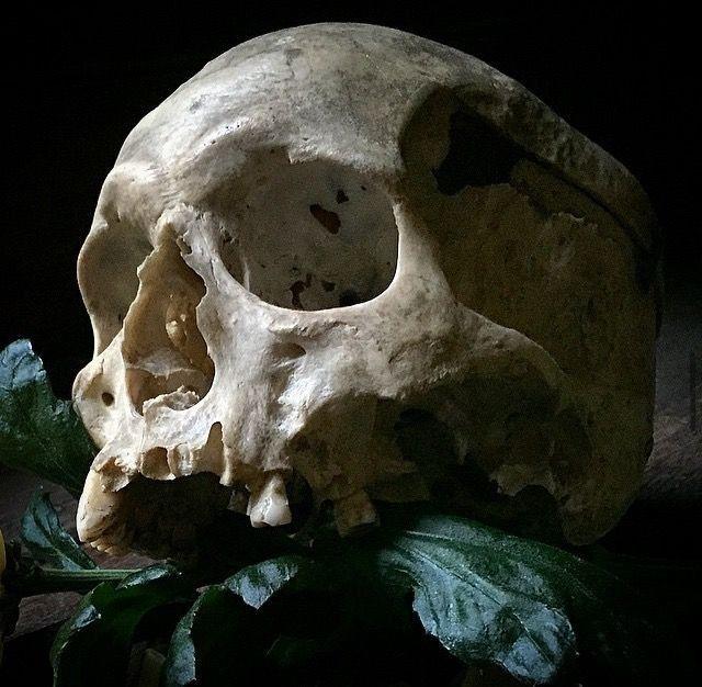 Pin von Daniel Magocs auf Skulls   Pinterest   Schädel, Totenköpfe ...