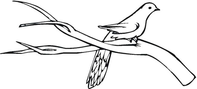 Pigeon Stands On Branch Tree Coloring Page Tree Coloring Page Coloring For Kids Coloring Pages