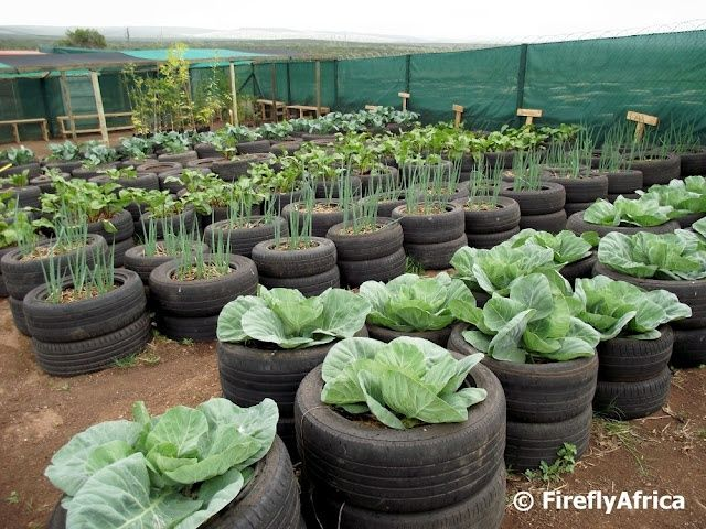 vegans living off the land recycled cartruck tire gardens