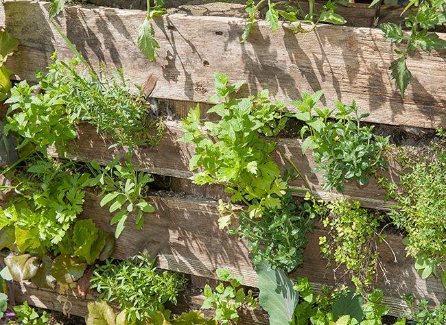 Comment cr er un potager sur palette conseils de - Comment faire un jardin vertical ...