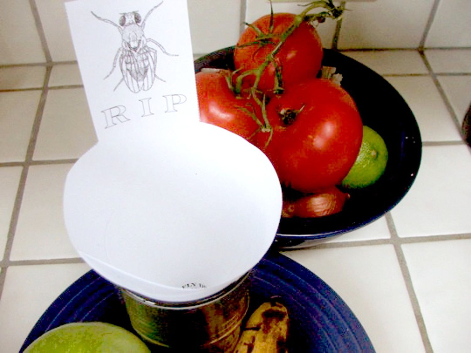 The best ways to get rid of fruit flies fly traps