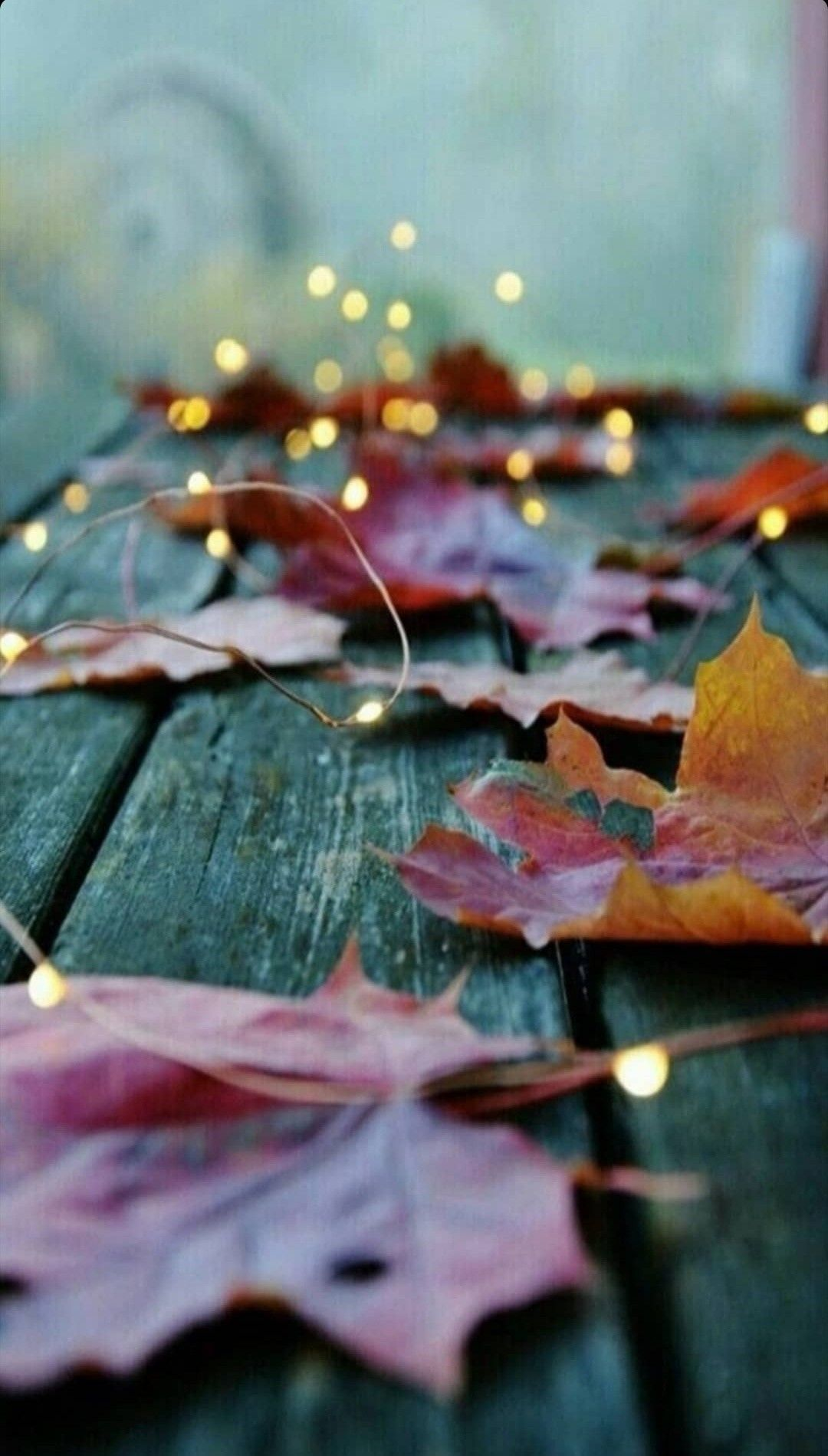 Latest The Most Beautiful Fall Season Background For Iphone 11 Iphone Wallpaper Fall Fall Wallpaper Thanksgiving Wallpaper