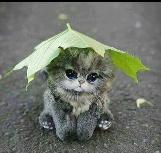 such sweet little one ... so cute too ... could be #candid #photography ... #kittens ... #cuteumbrellas