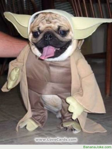 Adorable Animals Wearing Costumes PuppiesNeed We Say More - 32 adorable animals