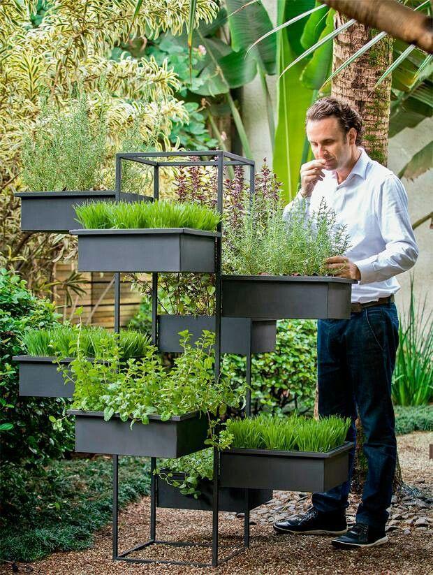 Photo of garden raised bed oregano, romero, albahaca, ……