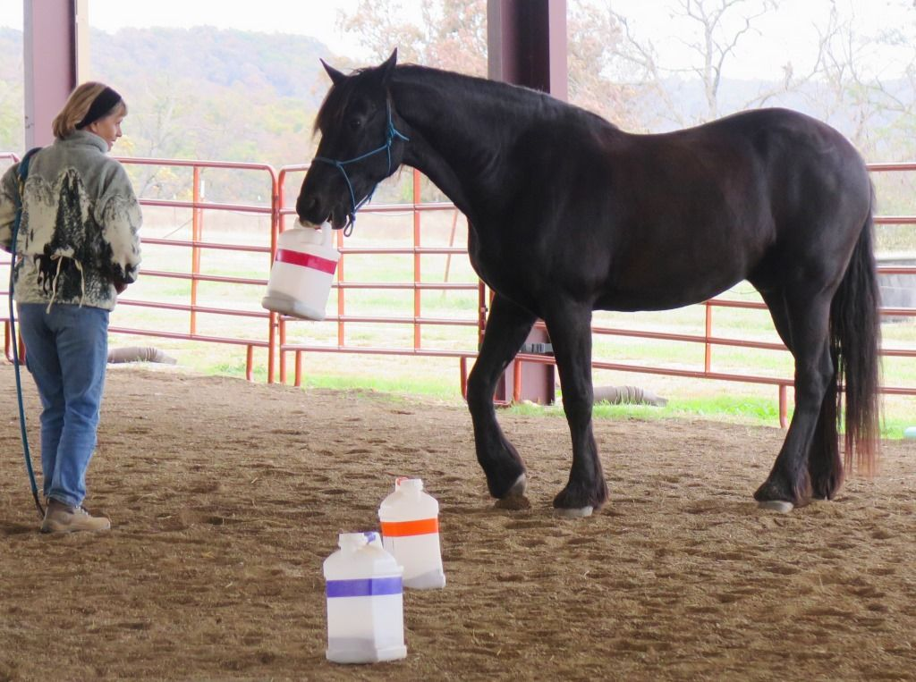 Equine Clicker Training Clinic Photos Arkansas November 2014