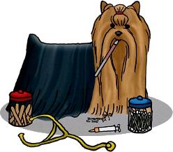 Salud del Yorkshire Terrier - Vacunas - Prevención - Síntomas - Dolor - Higiene y cuidados en la calle - Precauciones
