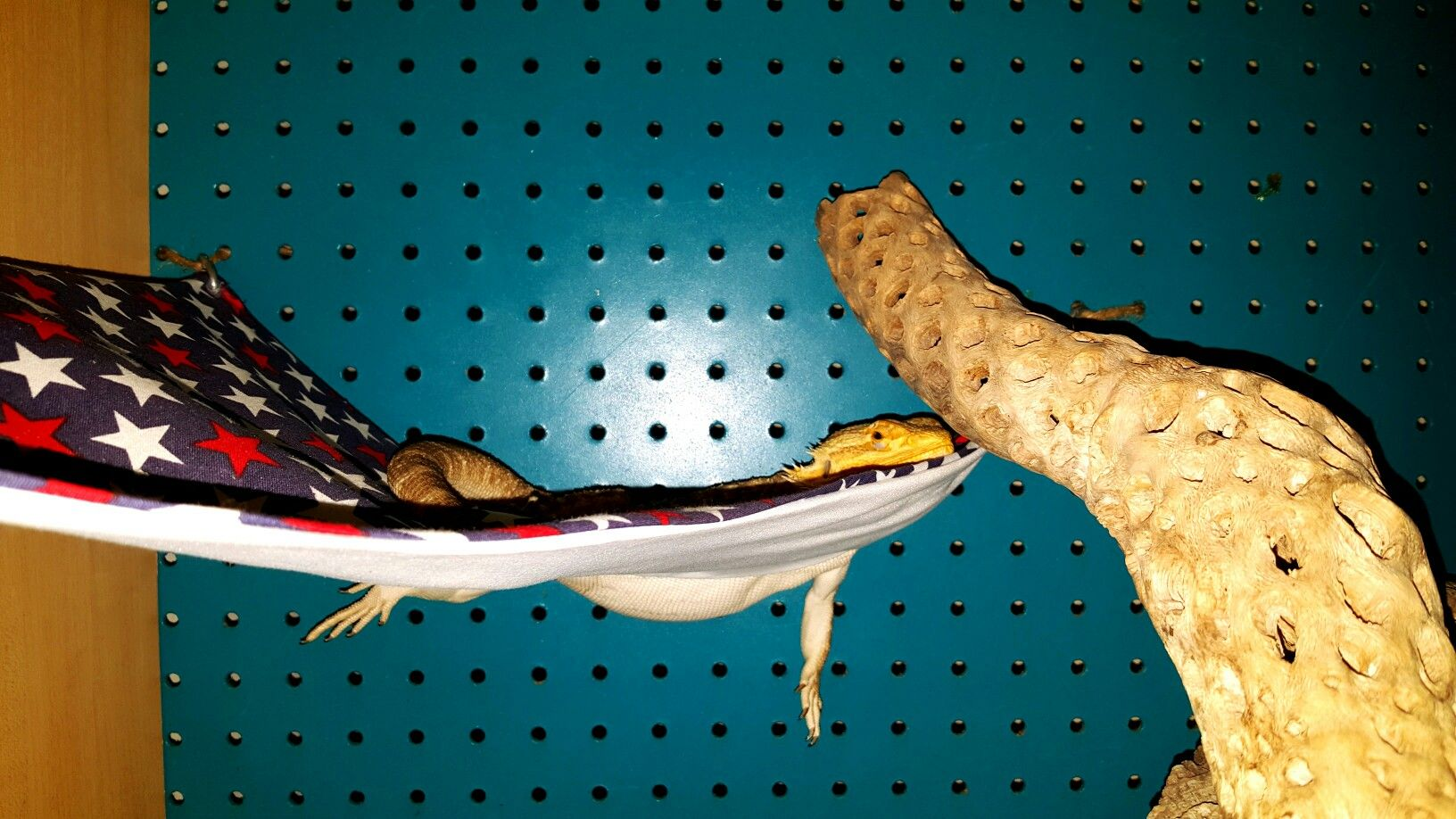 Medium image of www ksmsdragonlandings   custom made bearded dragon hammocks pillow beds and wooden beds