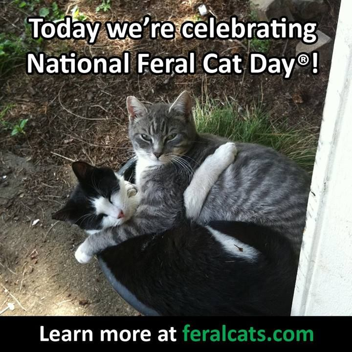 National Feral Cat Day Oct 16 Feral cats, Cats, Cat day