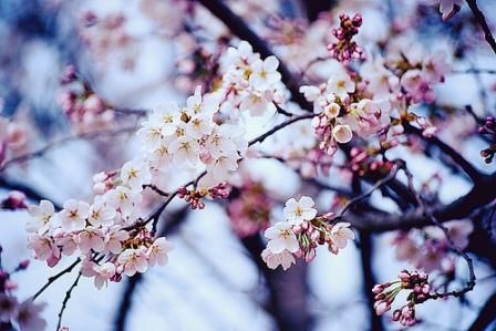 10 Things To Do Every Day To Stay Organized Life Your Way Beautiful Flowers Blossom Blossom Trees
