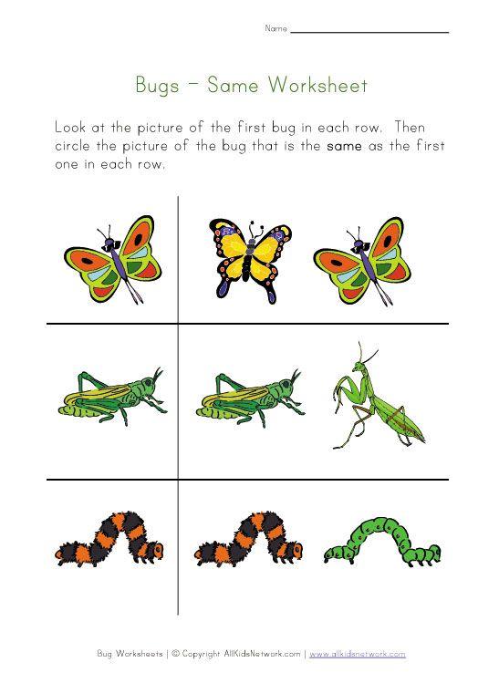 Bug Worksheets Preschool Worksheets Kindergarten Worksheets Printable Preschool Worksheets Insects worksheets for kindergarten