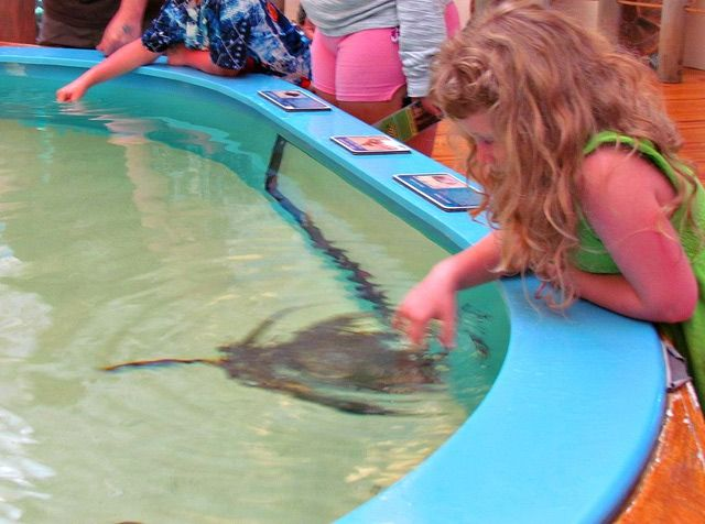 10 Fun Things To Do In Daytona Beach With Kids Pet A Stingray About Family Vacations