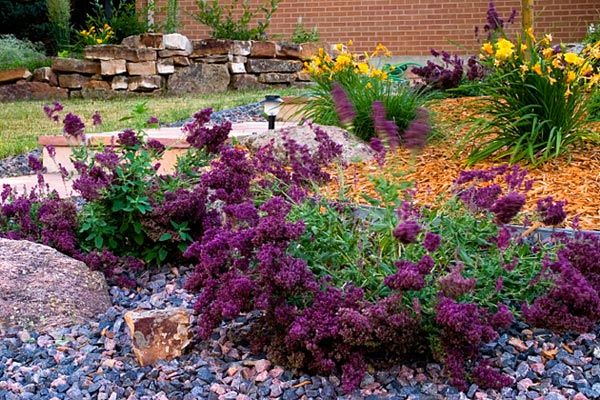 Landscaping Colorado Springs Landscape Design Timberline Xeriscape Landscaping Low Water Gardening Xeriscape
