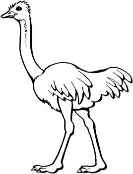 Free Coloring Page Of African Trees Ostrich Coloring Page