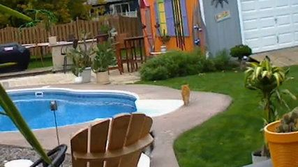 Cat Pushes Rival In Pool - http://dailyfunnypets.com/videos/cats/cat-pushes-rival-in-pool/ - An orange cat walks outside next to its family's pool. From across the yard, a black and white cat races up to it, hissing and getting defensive. The orange cat recoils in surprise, but the black and white cat persists until its rival ends up in... - afv, americas, and, black, cat, catty, fall, funniest, funny, hilariou, home, mean, orange, plash, pool, Push, rival, video, White