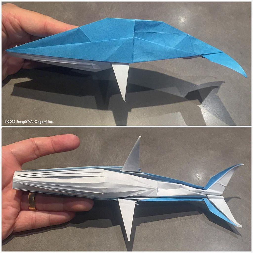 Study Humpback Whale After All These Years I Finally Have One Am Mostly Happy With This Has Been A Difficult Subject For Me By Joseph Wu Origami