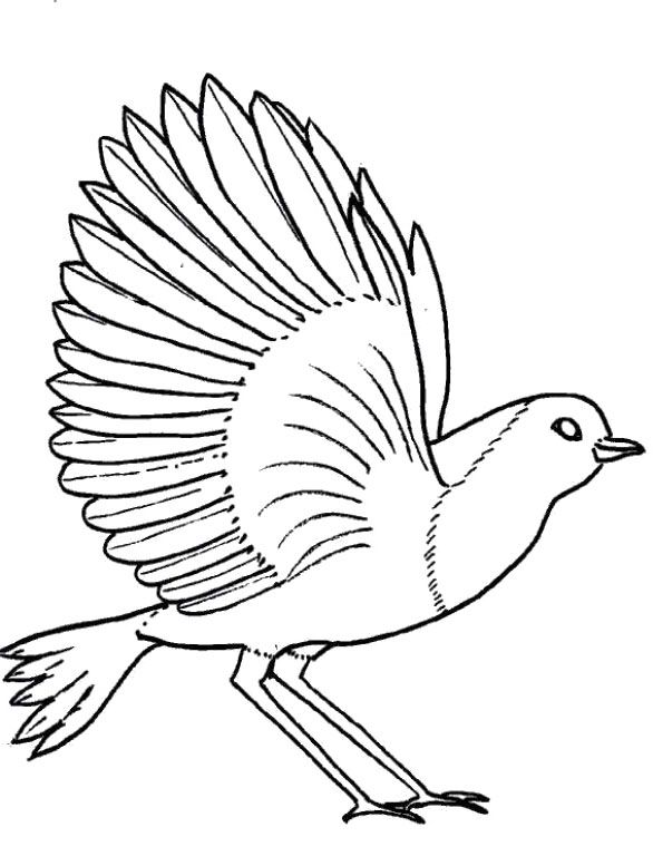 Big Bird Flying Coloring Pages Art Pinterest Colouring Pages