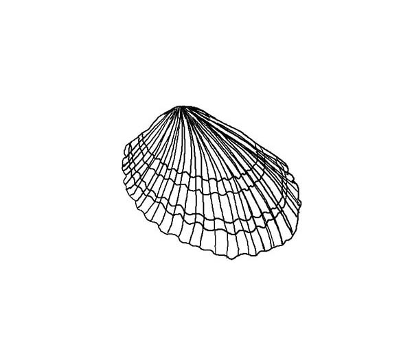 Lovely Van Hynings Cockle Seashell Coloring Page Download Print Online Coloring Pages For Free Color Online Coloring Pages Coloring Pages Online Coloring