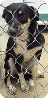 Pin By Christa Lombardo On Urgent Pets Dogs Puppies Dogs