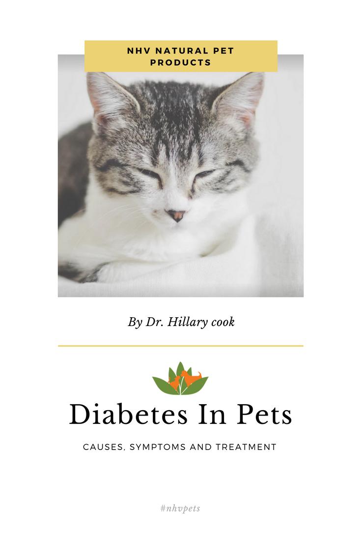 Vet Help For Diabetes in Pets Diabetic dog, Cat diseases