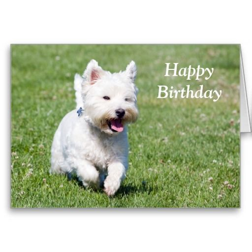 West Highland White Terrier Dog Birthday Card Dog Birthday West