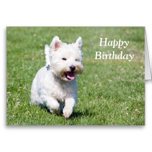 anniversaire chien westie