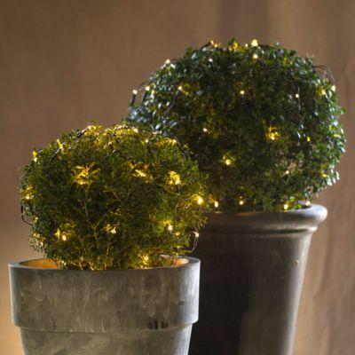 Boxwood Net Light Sparkle for Christmas Pinterest Holiday