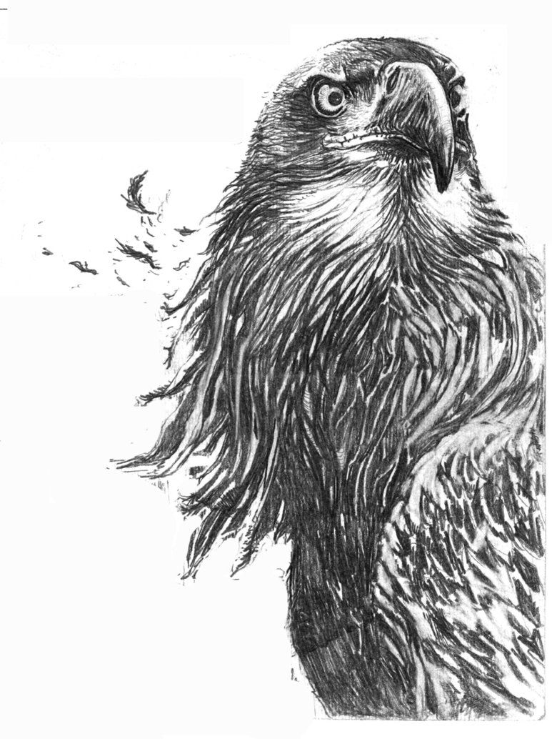 How to Draw a Eagle | Eagle drawing by ~SUBICstevan on ...