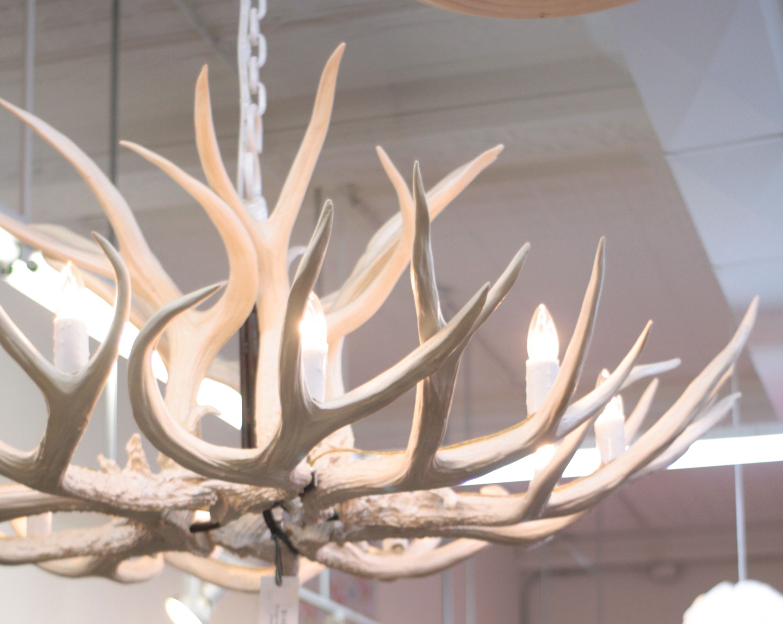 White faux antler chandelier anna lee pinterest antlers white faux antler chandelier arubaitofo Gallery