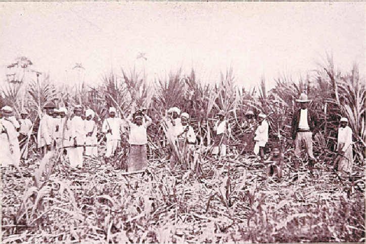 On the sugar estates of 19th and early 20th century Trinidad, there was an…  | Trinidad, Caribbean carnival, Tobago