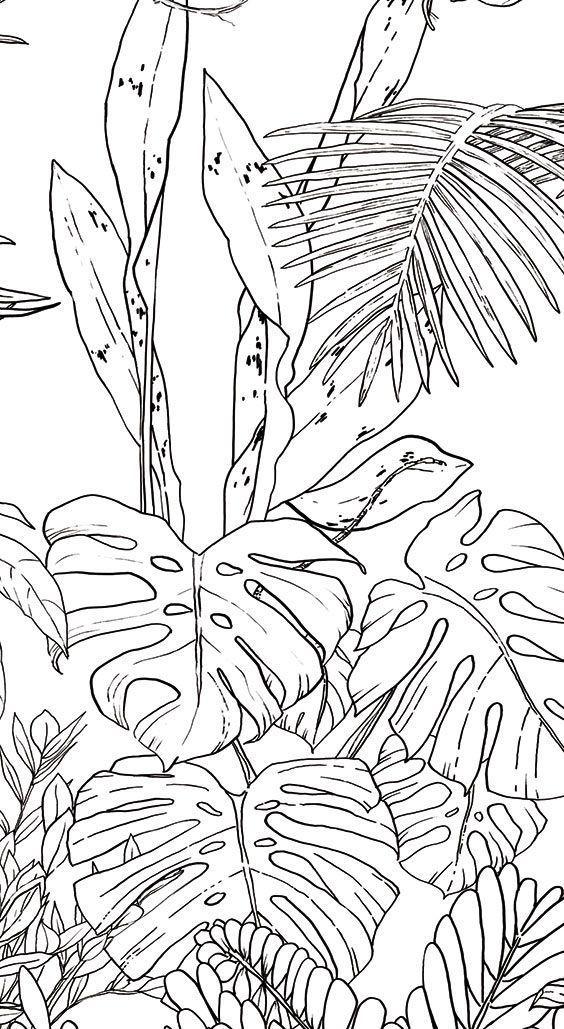 Ohmywall Papier Peint Jungle Tropical Noir Et Blanc Panoramique Par Caddous Purewhite Ohmywall Papier Peint Jung Mural Tropikal Boyama Sayfalari Mandala