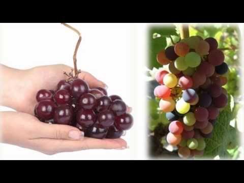 Las uva de de contraindicaciones pasas