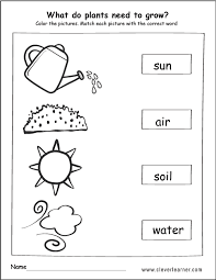 Image result for what do plants need to grow worksheet ...