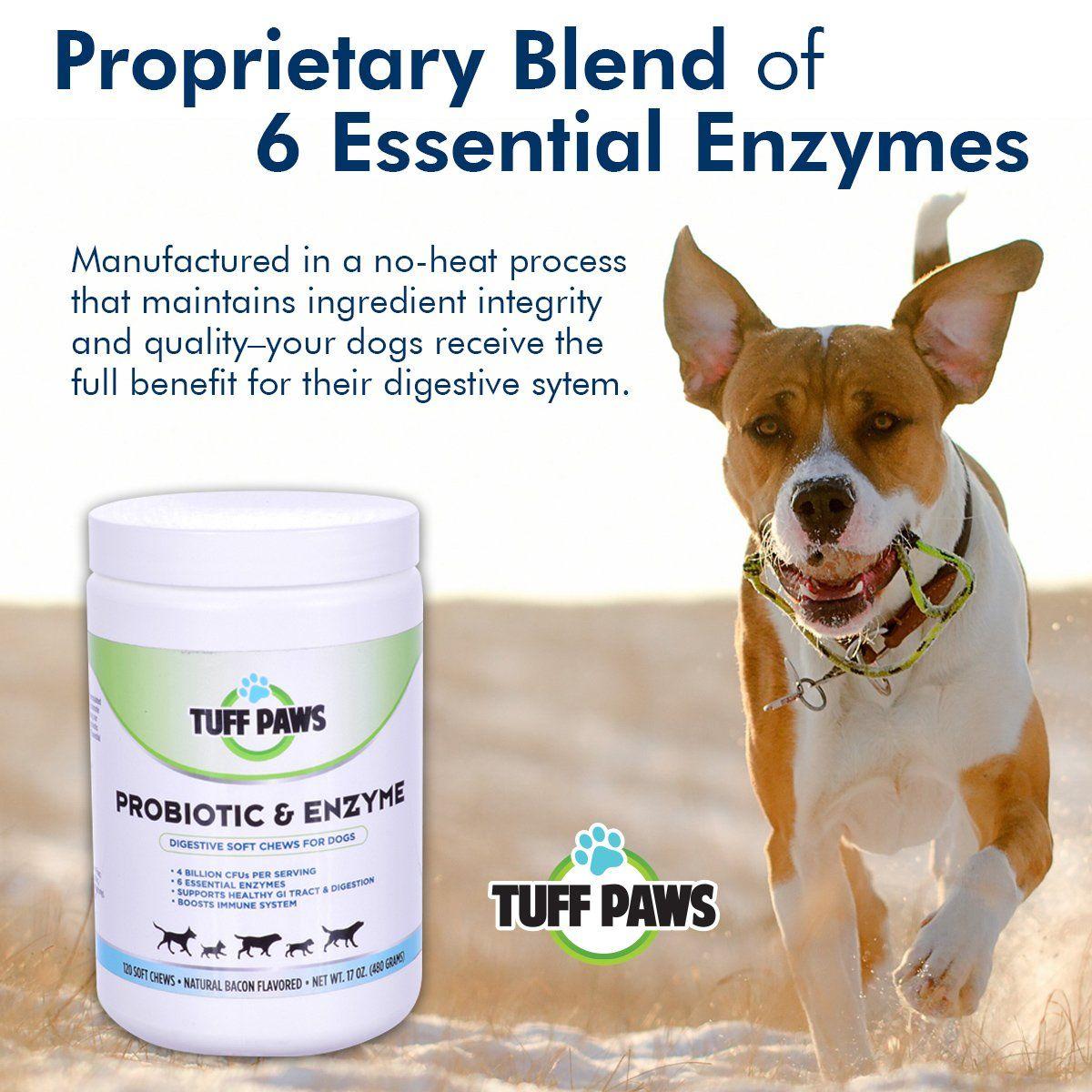 All Natural Probiotic Petssupplementsideas Pets Pet