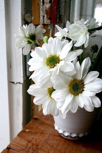 daisy love | flower infatuation | Pinterest | Gänseblümchen, Blumen ...