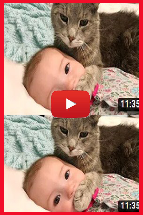 Baby and Cat Fun and Fails Funny Baby Video Funny cat