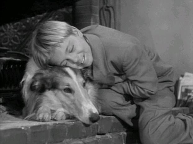 Pin on Lassie Photos