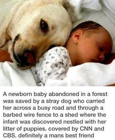 Dog Rescues Abandoned Baby In Forest