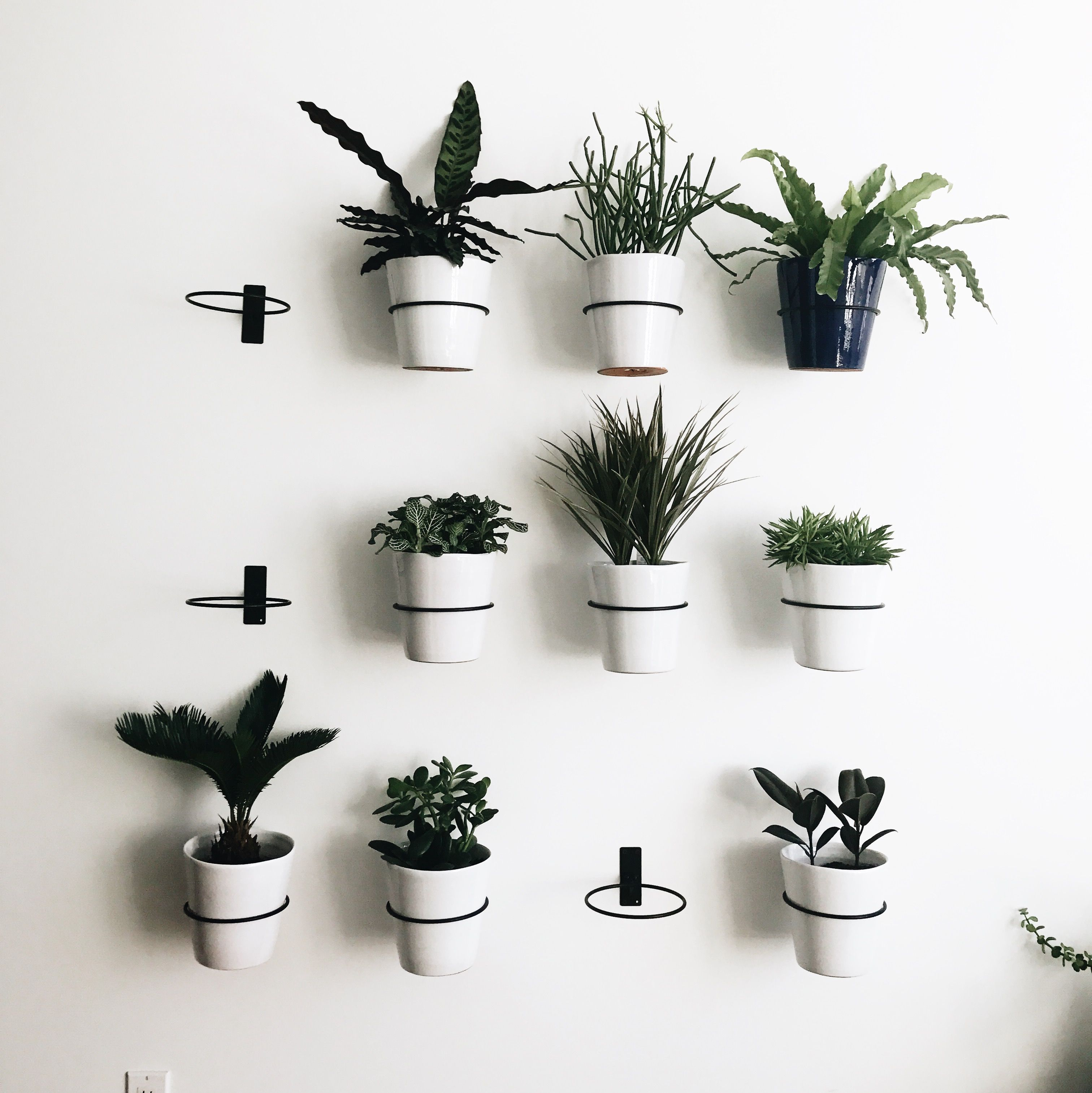Indoor Plant Wall With Planters And Wall Planter Hooks From Crate