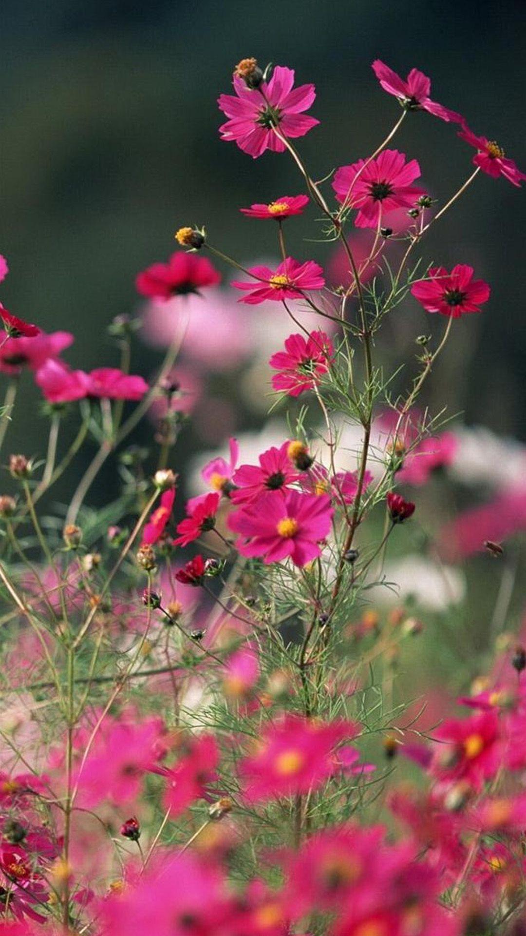 Nature Little Pink Flower Branch IPhone 6 Wallpaper