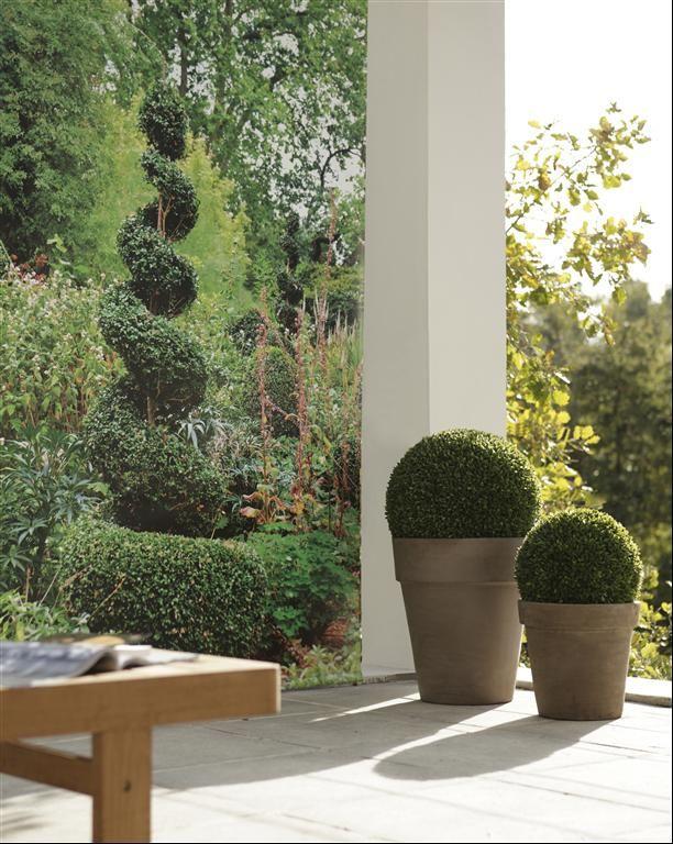 Des boules de buis classe moderne et pur arbuste for Arbuste interieur maison