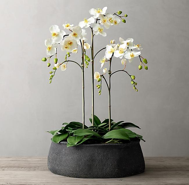 Faux Orchid Plant Crosshatch Concrete Vessel Extra Large Orchids Concrete Bowl Plants
