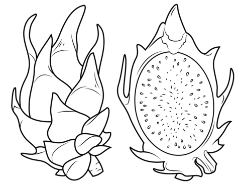 Dragon Fruit And Its Cross Section Coloring Page Free Printable Coloring Pages Fruit Coloring Pages Free Coloring Pages Coloring Pages