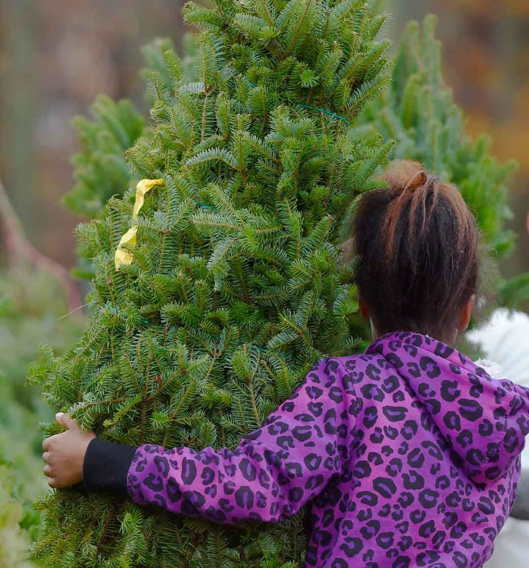 In This Week S Blog Post We Take You On A Trip Around The World Looking At Different Christmas Tree Traditi In 2020 Different Christmas Trees Green Burial Green Inspo